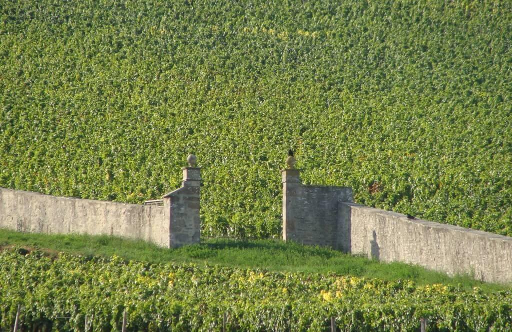 studio-wina-burgundia